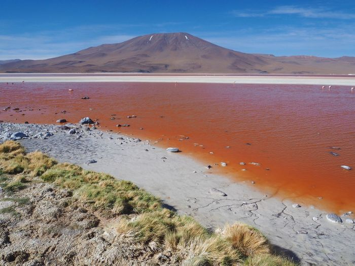 Laguna Roja - insane colours out in nature Contrast Naturephotography Pachamama  Abandoned Bolivia Salt Flats Southamerica Desert Travel Destinations Travelgram Natural Reserve Bolivian Altiplano Bolivia Lake Bloodred Land Mountain Beauty In Nature Water Scenics - Nature Tranquility Nature Landscape Outdoors