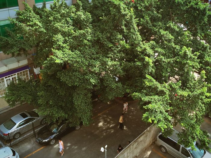 Hello World Goodday OpenEdit On The Road City Taking Photos Hi! The View From My Window Morning Green