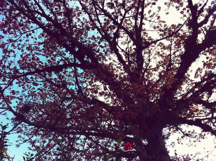 Nature 😊
