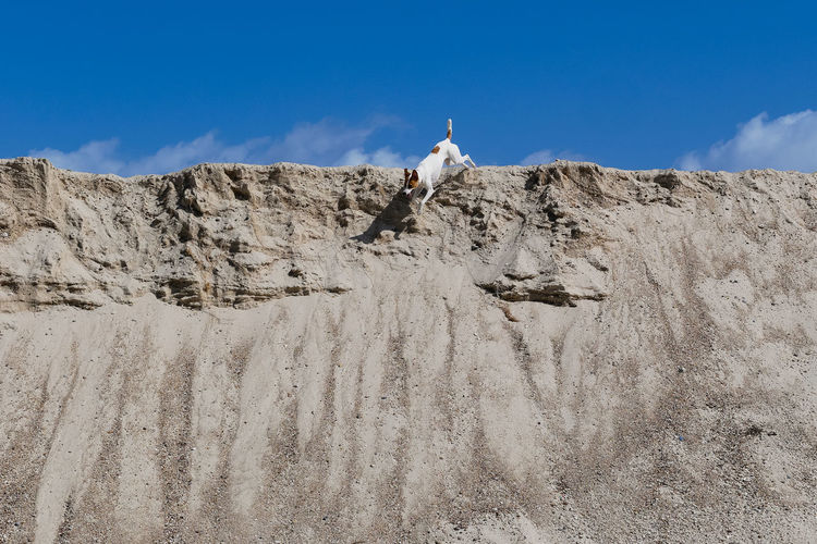 Low angle view of dog on sand dune