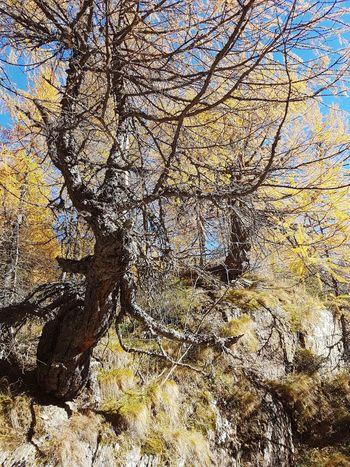Larix decidua Tree Beauty In Nature