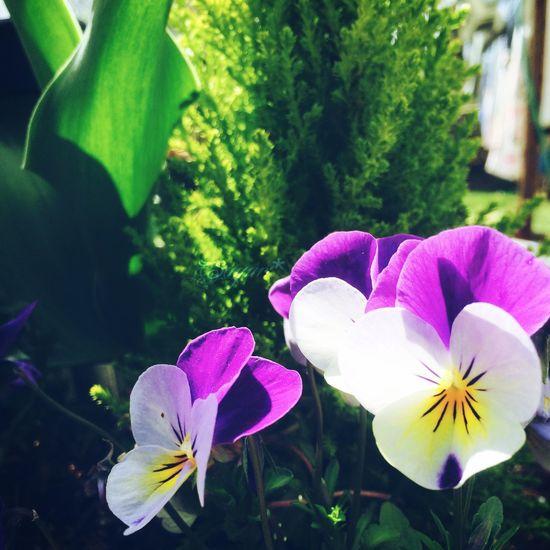 おはよう Goodmorning Flowers Spring Flowers Green Japan
