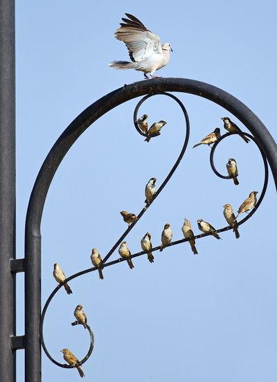 dove and birds