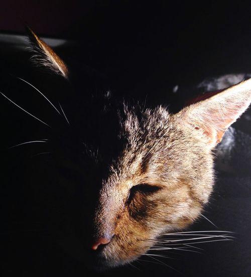 Phantom Unknown Darkness And Light Half Face Spotlight Cat Cat♡ Cats Photogenic