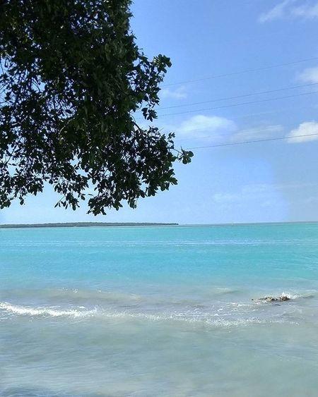Florida Tropical AguaCristalina Turquoise Primeshots Igpowerclub Igprimeshots Shotoftheday Igoftheday Fiftyshades_of_nature