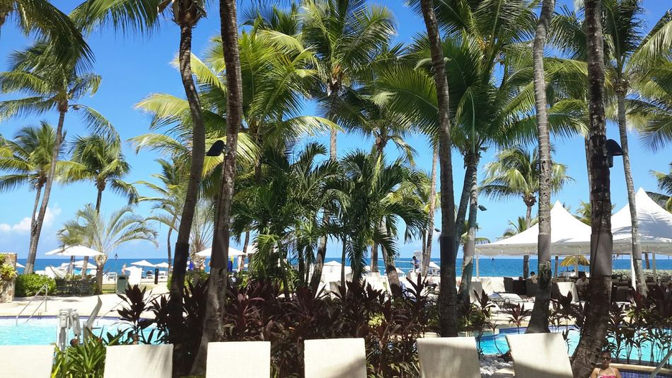 Beautiful Palm Trees in Puerto Rico. Lovetheview Bluewater Enjoying The Sun PALMTREES 🌴🌴🌴 Warmth