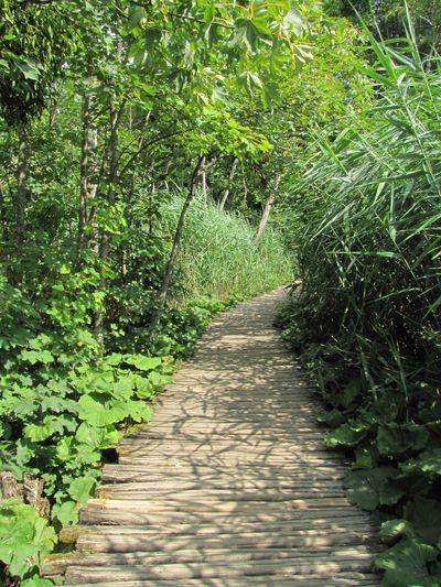 Nature Plitvice National Park Plitvicelake Green