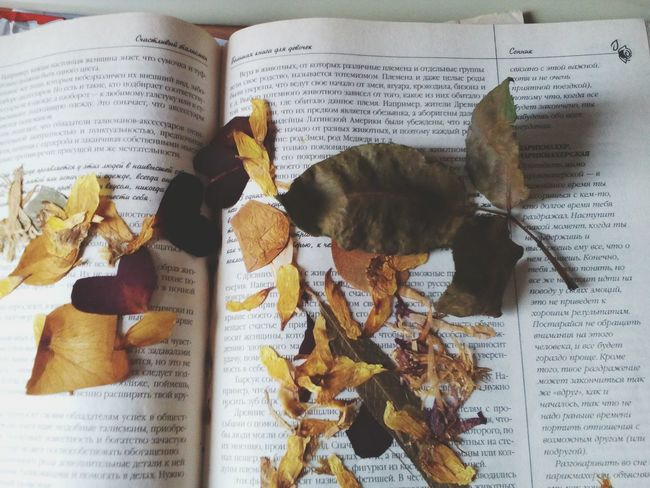 Book Childhood Herbarium