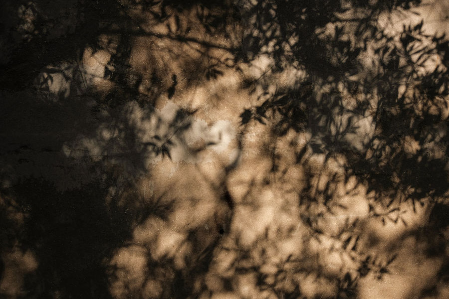 Olive Shadow - Olive Tree Beauty In Nature Branch Close-up Ligth And Shadow Low Angle View Nature No People Outdoors Scenics Shadow Sunset Tree