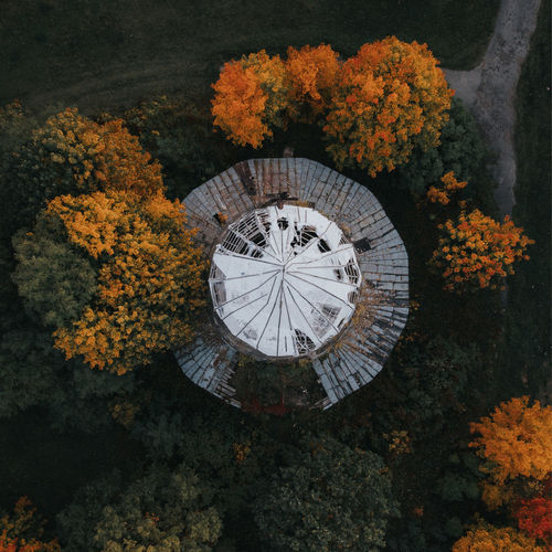High angle view of flowering plants by trees