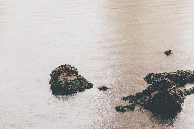 High Angle View Of Rocks On Lake During Rainy Season