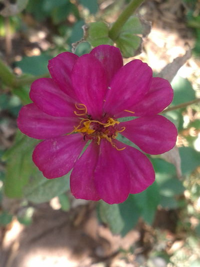 Flower Nature Colour Of Life Popular Pink Flower No Edit No Filter Colourfull Flower In Hand Flower Collection