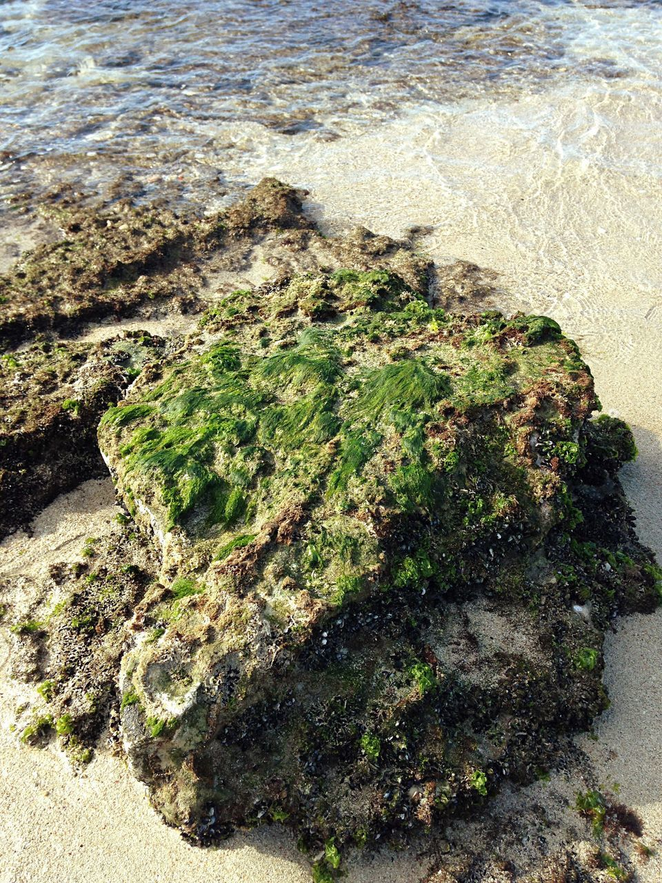 sea, nature, water, high angle view, rock - object, moss, day, no people, beach, algae, outdoors, beauty in nature, sunlight, tranquility, sand, wave, close-up