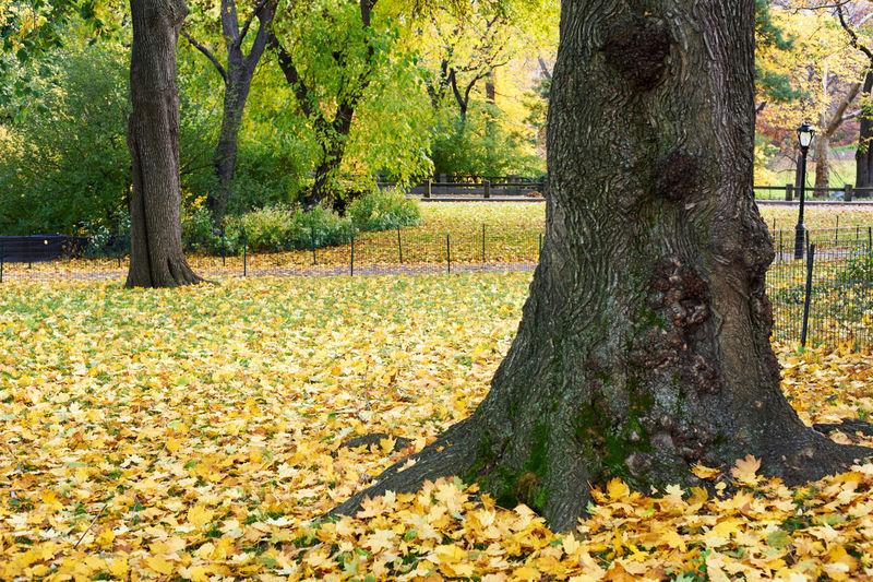 Tree Trunk Park