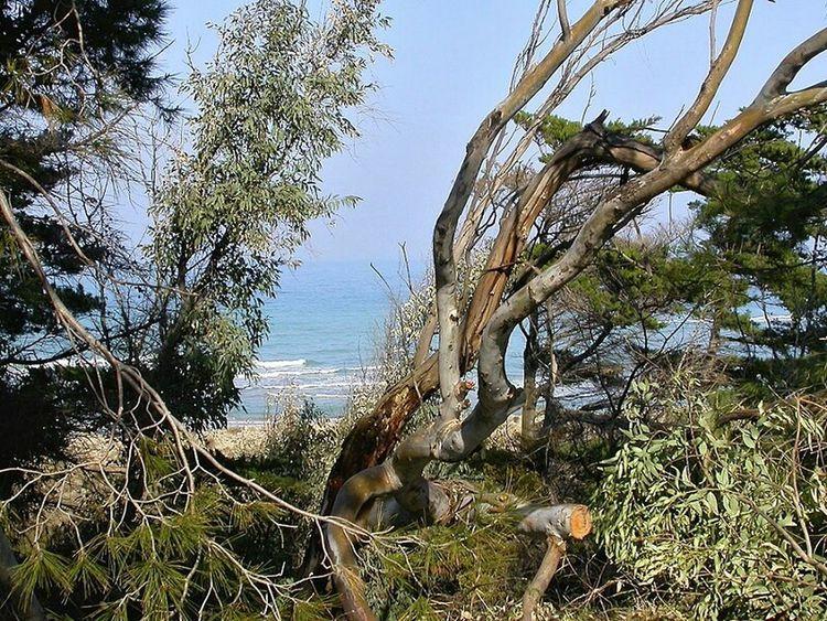 Italia Italy Molise Petacciato Outdoor Day Daylight Sea Mare Adriatico Mar Adriatico Mediterraneo Mar Mediterráneo Cb Water Costa Costa Adriatica