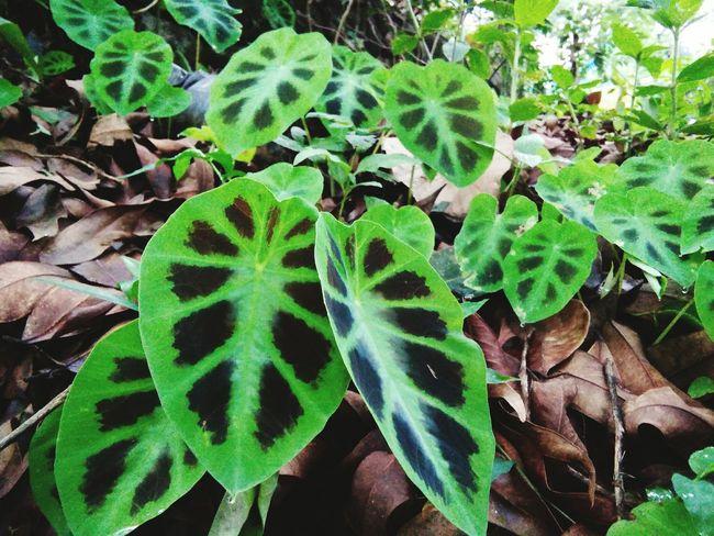Nature Beautifulinnature Naturalbeauty Photography Landscape Green Leaves Western Ghats India