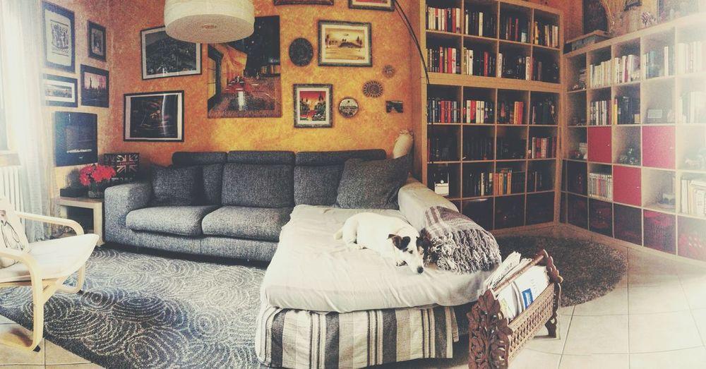 * my yellow house * House Yellow Yellow House  Sofa Grey Grey Sofa Dog Window Man Made Object Pretty Pretty House Comfortable