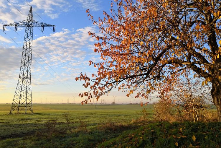 Countryside Tree Autumn Autumn Mood Autumn🍁🍁🍁 Landscape Landscape_Collection EyeEm Nature Lover EyeEm Masterclass Germany Honor Tree Technology Rural Scene Electricity  Electricity Pylon Agriculture Cable Field Fuel And Power Generation Sky Power Line  Power Cable Fall Change