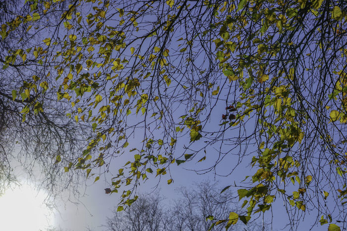 Tree Plant Branch Sky Low Angle View No People Nature Beauty In Nature Day Growth Tranquility Yellow Outdoors Blue Sunlight Backgrounds Clear Sky Scenics - Nature Full Frame Plant Part Tree Canopy