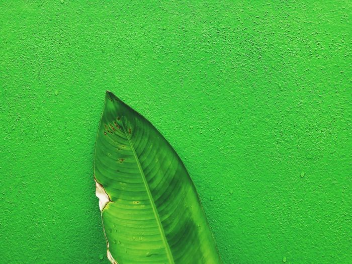 Architecture Banana Leaf Beauty In Nature Built Structure Close-up Day Freshness Green Green Background Green Color Growth Leaf Leaves Nature No People One Animal Outdoors Plant Plant Part Wall - Building Feature Water
