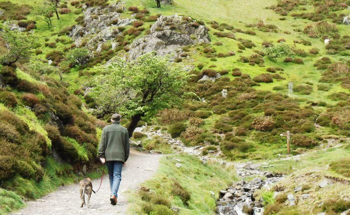 Dog walker in Cardingmill Valley, Church Stretton, Shropshire. Dog Walking Church Stretton Shropshire People EyeEm Nature Lover
