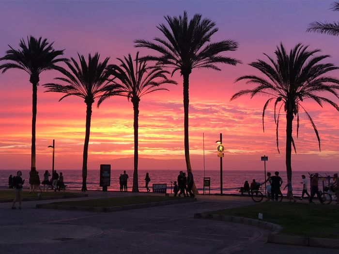 Silhouette of palm trees by beach against sky during sunset