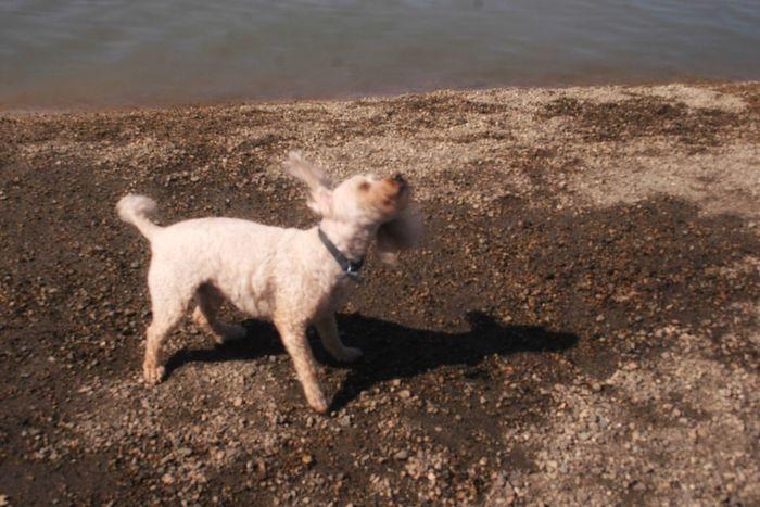 Domestic Animals Dog Animal Themes Mammal One Animal Pets Outdoors Day No People Dog Park Fun