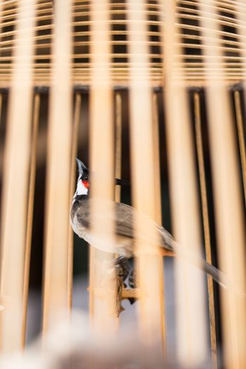 Blurred motion of bird perching on metal