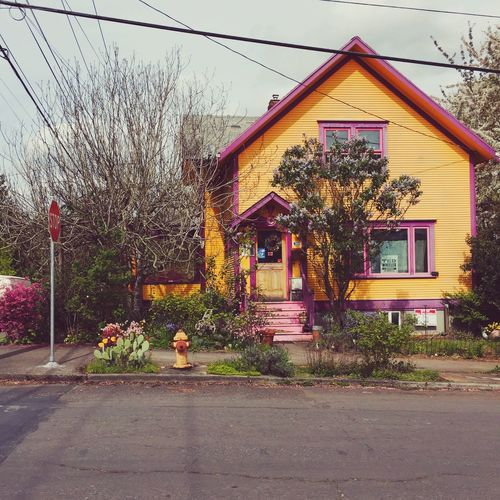 Portland Yellow