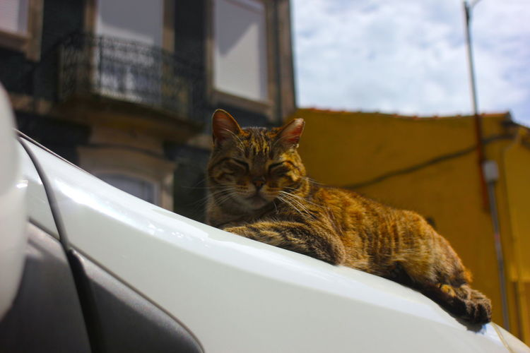 Cat lying down in a car