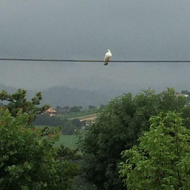 Colombabianca Fuoripiove Bruttotempo Rain Eancorarain Stiamoacasacheèmeglio 🙏☺️