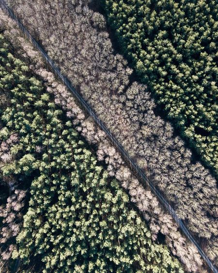 TheWeekOnEyeEM Forest Eyembestshots Eyemphotography Eyem Forest Green Minimalism Germany Minimal Fromabove Mavic Pro Dji Green Color High Angle View No People Day Nature Full Frame Outdoors Backgrounds Beauty In Nature Tree Shades Of Winter The Great Outdoors - 2018 EyeEm Awards