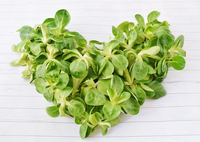Heart from vegetables Healthy Eating Green Color Leaf Food And Drink Freshness Food Raw Food Vegetable Wood - Material Herb Studio Shot No People Dieting Close-up Nature Mediterranean Food Indoors  Basil Plant Salad Heart ❤ Green Leaf Concept Healthy Food Freshness