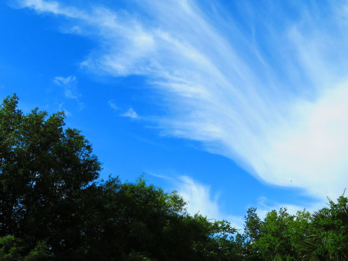 Diagonal trees and clouds Blue Sky Blue Sky And Clouds Unusual Cloud Formation Tree Blue Forest Tree Area Sky Cloud - Sky Treetop Tree Canopy  WoodLand
