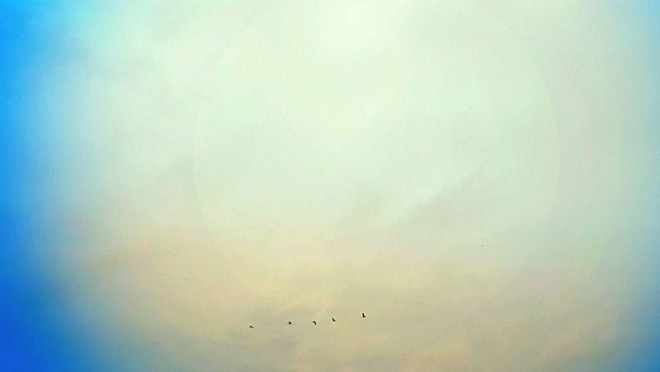 Round Cloud Behind Geese Sky Geese Fly Birds Cloud Beauty Beautyinnature  Spring Mooresville NC Sunrise Cloudsandsky