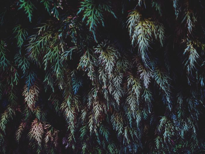 Tropical fern leaves nature background. Biology Botanical Botany Green Color Nature Tree Backgrounds Full Frame Close-up Pixelated Cursor Graphical User Interface Binary Code Artificial Intelligence Growing Dissolving Pollen Blooming Growth Petal Leaf Vein Pattern