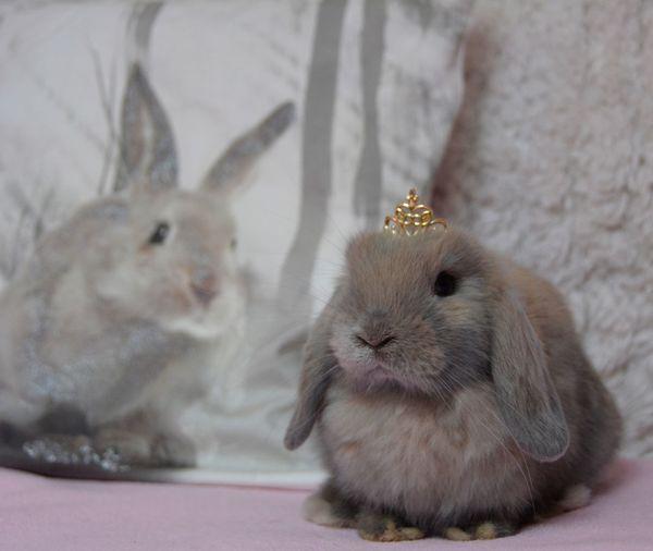 Close-up of rabbit at home