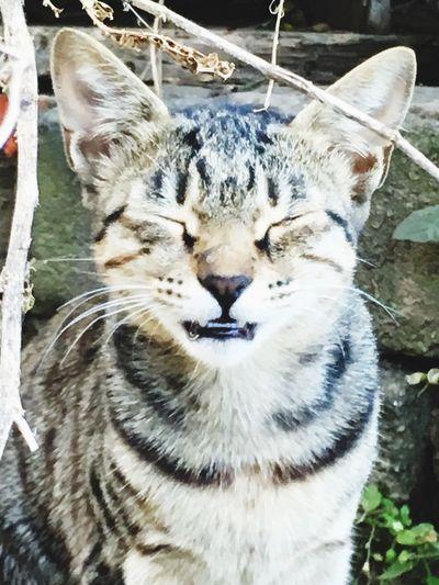 Cat Closing Eyes Say No To Photo Mewo. Meow
