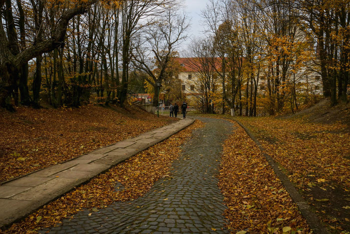 The road with fallen leaves paved with stone leading to the castle Autumn Autumn Collection Autumn Colors Autumn Leaves Beauty In Nature Castle Day Fallen Leaves Growth Historical Nature No People Outdoors Paving Stone Prospect Prospective Road Scenics The Way Forward Tranquil Scene Tranquility Tree Upwards The Secret Spaces