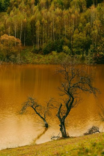 Tree by cyanide lake in autumn forest