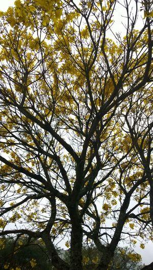 árvores, Natureza, Paisagens Naturais, Primavera No People Flower