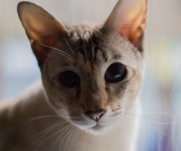 Kitty 🐱 Cat
