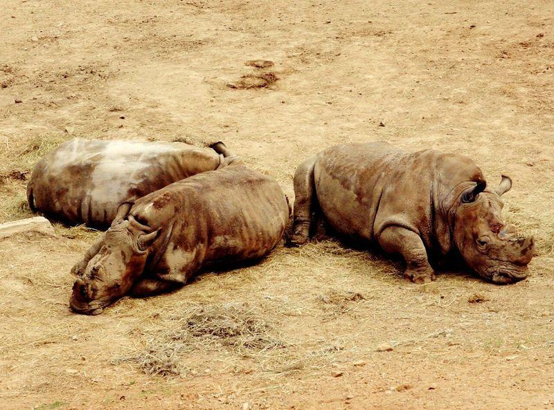 Inthezoo Animals Iloveanimals Zoo Cute Animals Hello ❤