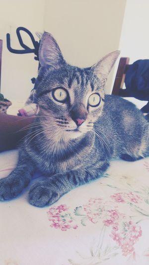 Cat♡ My crush Love love
