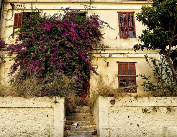 Rhodes Rhodes Greece Greece GREECE ♥♥ Rhodes Old Town, Greece Abandoned House Italianate Architecture Architecture Architecture_collection Architectural Detail Architecturelovers Sleeping Cat Greek Cats Bougainvillea Wooden Shutters