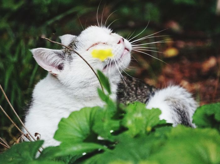 Katze Fotoshot