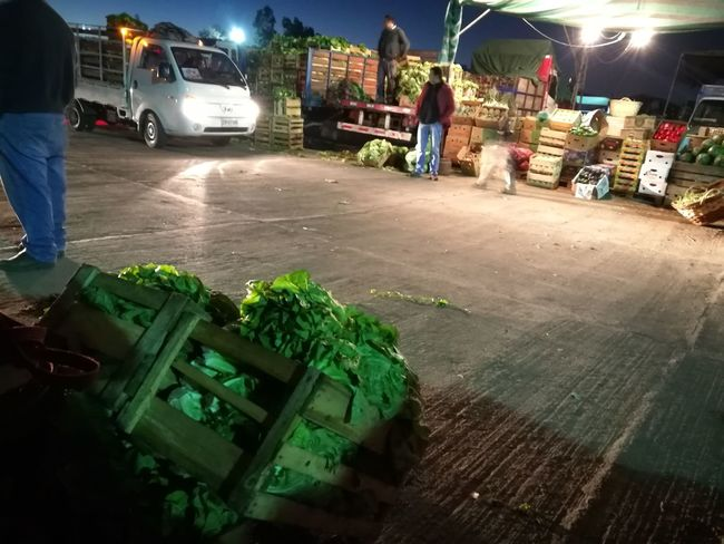 Verduras Huaweiphotography HuaweiP9 Madrugando Fair Sales Fromearly Lettuce.