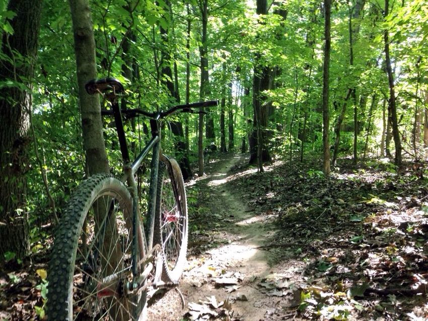 No sign of fall in tge woods today. Single For Life Life On 2 Wheels Angry Cyclist Bicycle Club EyeEm Nature Lover