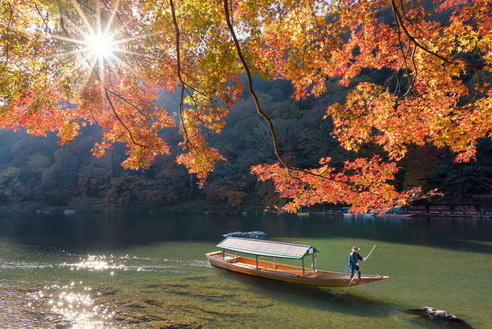 Beautiful nature view of Arashiyama in autumn season along the river in Kyoto, Japan Arashiyama Asian  Autumn Colors Japan Nature Tourist Travel Vacations Attraction Beauty In Nature Destination Gingko Kansai Kyoto Landmark Landscape Leaf Maple Outdoor Relaxation River Viewpoint Zen Zen-like