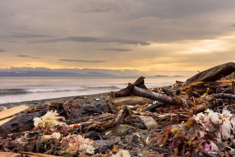 Driftwood And Garbage At Beach Against Sky During Sunset
